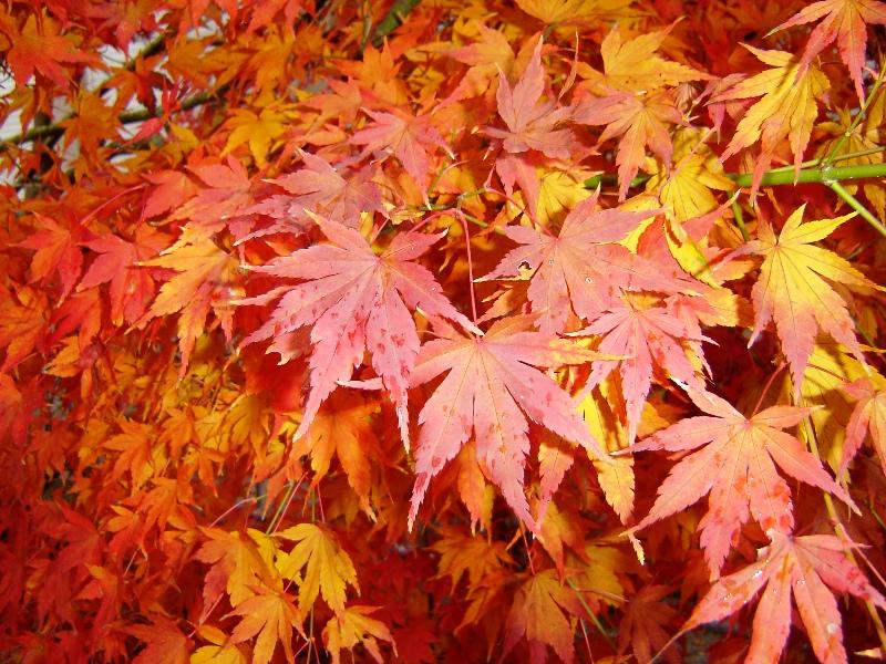 Warum färben sich im Herbst die Blätter der Bäume? - Pflanzen ...